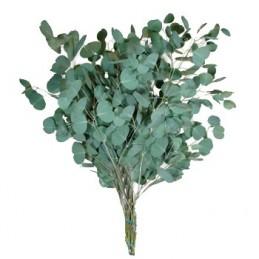Menthe Eucalyptus