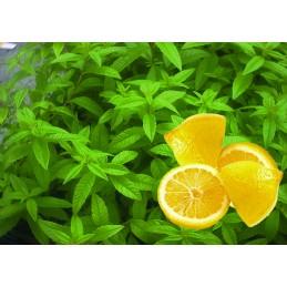 Verveine Citron